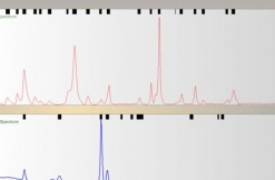 Raman spectra libraries now available for Foram & ffTA